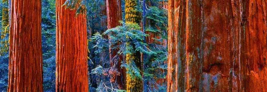 20130505_alberi